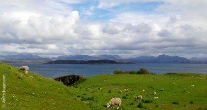 Typsich: Grasende Schafe, Blick über das Wasser in die Berge